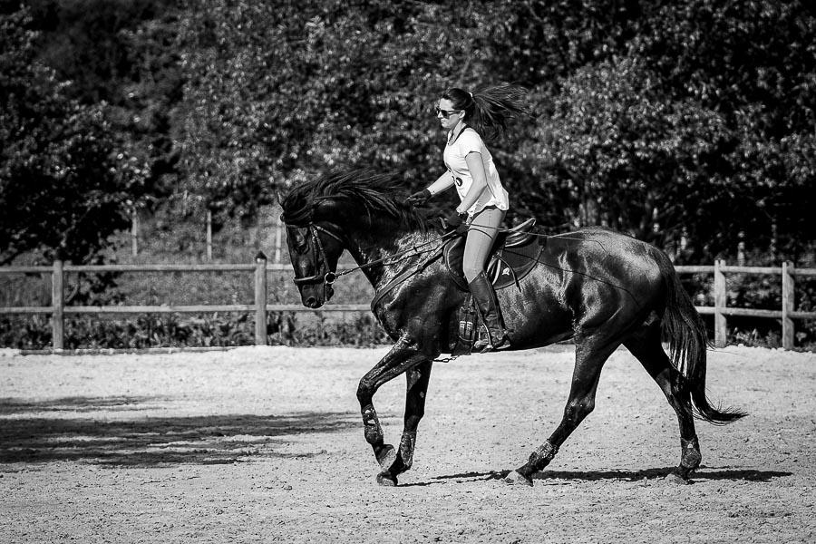 Photographe-équitation-book