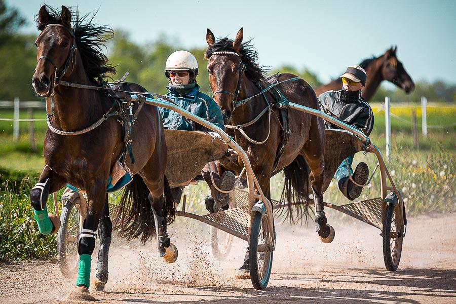 Photographe équitation équestre cheval