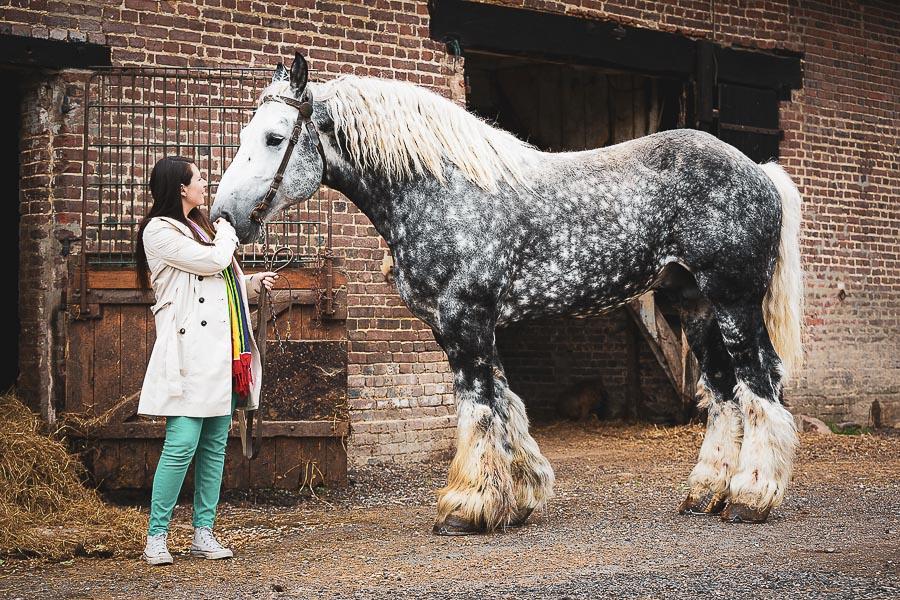 Photographe équitation